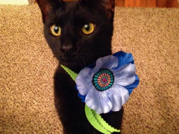 Spectre wearing a Giant Catnip Poppy