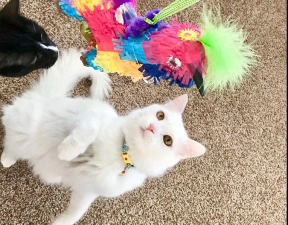 Andrea's cat with piñata