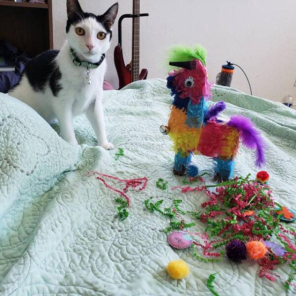 Anjanette Mendoza cat with piñata