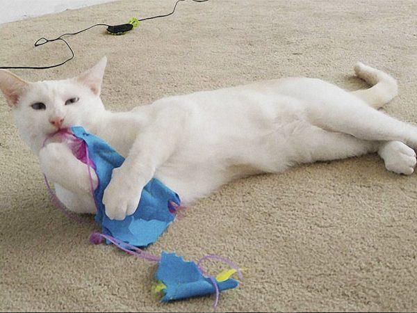 Cat with Baby Batnip
