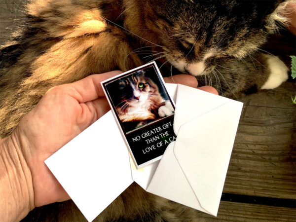 Because Cats MiniCards Envelope-with-Tamale