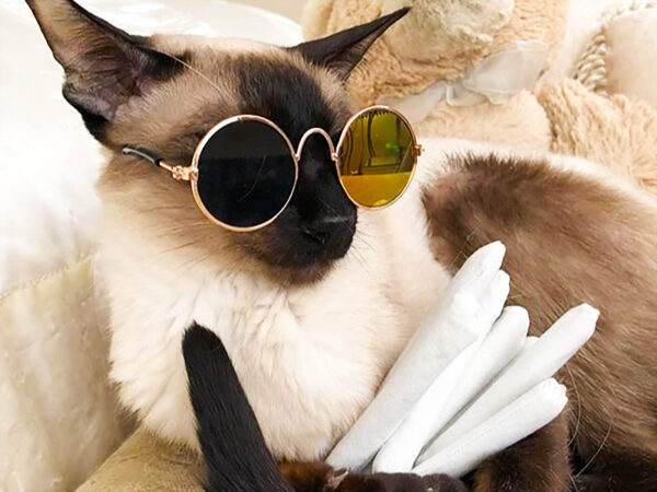 Cat with Sunglass and Catnip Joint Gift Set for Cats, featuring Mirrored Pet Sunglasses