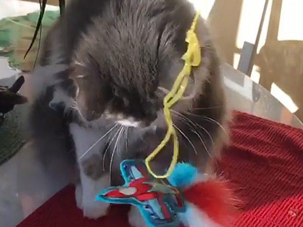 Olive and Jetnip Jet Catnip Cat Toy