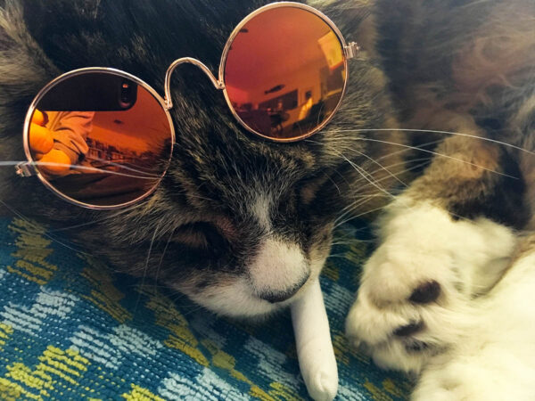 Tamale Sunglass and Catnip Joint Gift Set for Cats, featuring Mirrored Pet Sunglasses