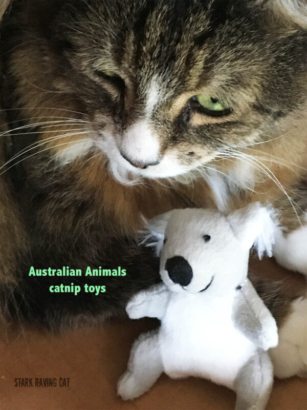 Tamale with Koala from Australian Animals Catnip Cat Toys