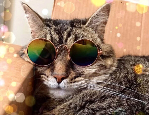 Cat with Sunglasses