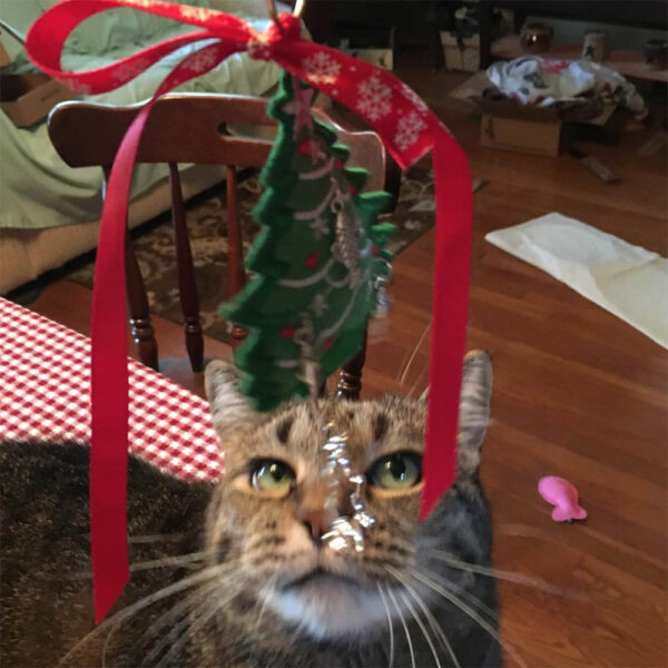 Cat and Christmas Ornament