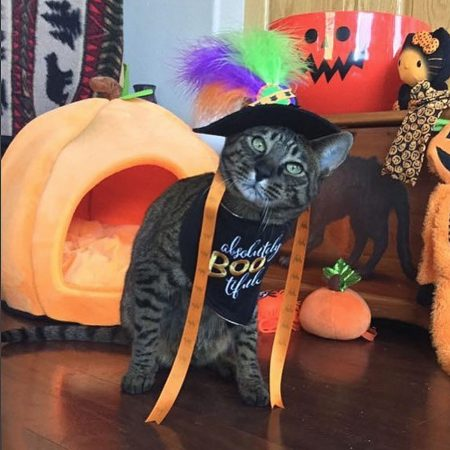 Cat with halloween hat