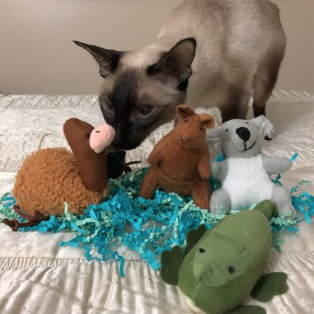 Cat and Aussie Catnip Toys