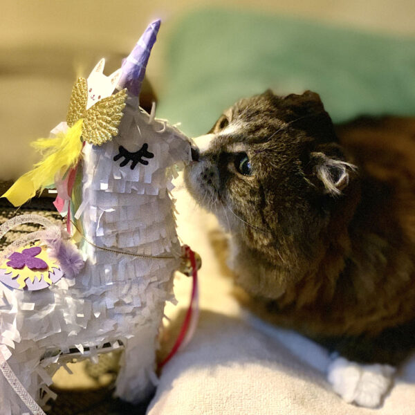 Unicorn Piñata Tamale