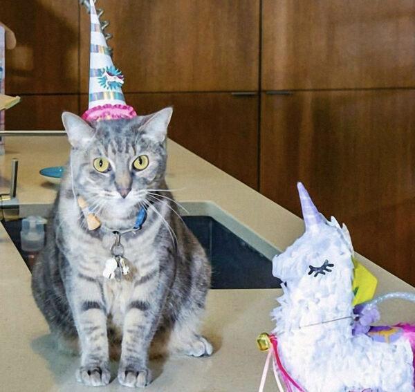 Unicorn & Party Hat