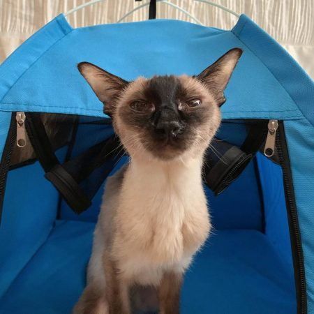 Crystal loves her blue tent
