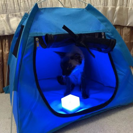 Crystal in a blue tent