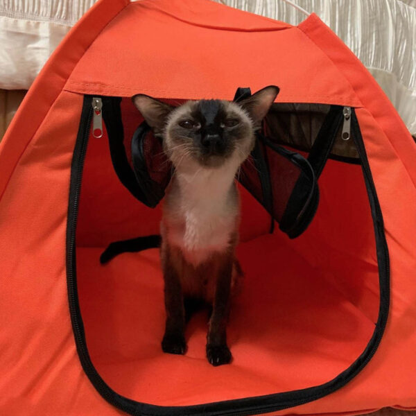 Crystal loves her orange tent