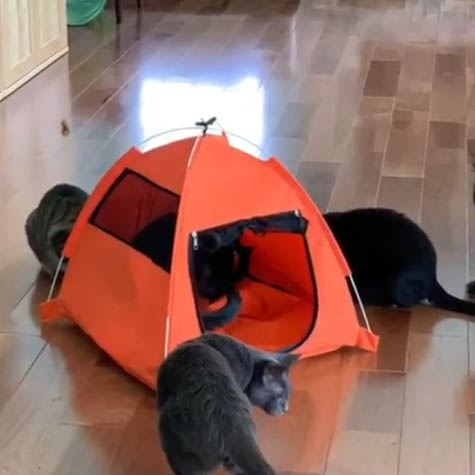 Kulkeys Cats & Tent