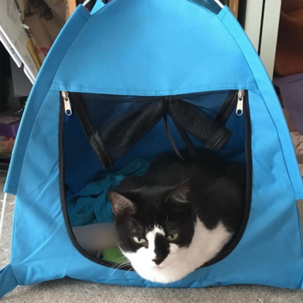 George in Blue Tent