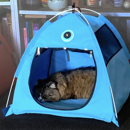 Tamale Napping in Blue Tent