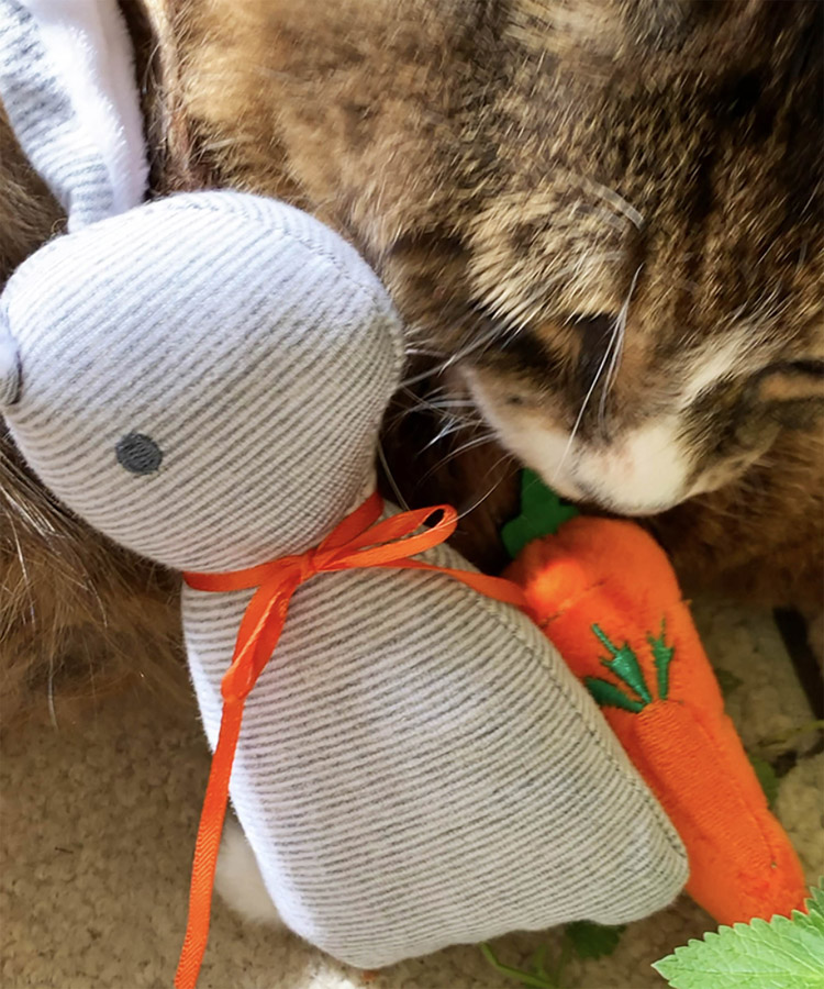 Bunny & Carrot Catnip Toy Set